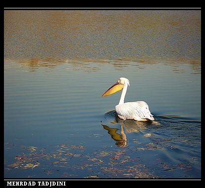 PHOTOGRAFER: MEHRDAD TADJDINI